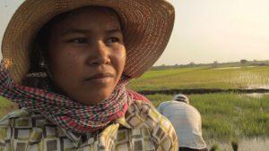 Seng Channeang in het rijstveld